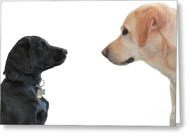 Puppies Photographs Greeting Cards - Seeing Eye To Eye Greeting Card by Vicki Spindler