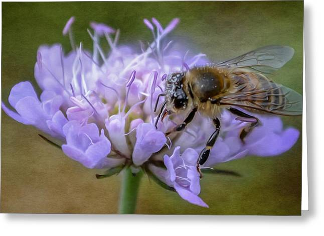 At Work Greeting Cards - Bee Greeting Card by Olimpia Negura