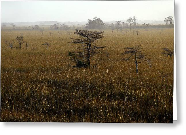 Scenic Artwork Greeting Cards - Seminole morning Greeting Card by David Lee Thompson