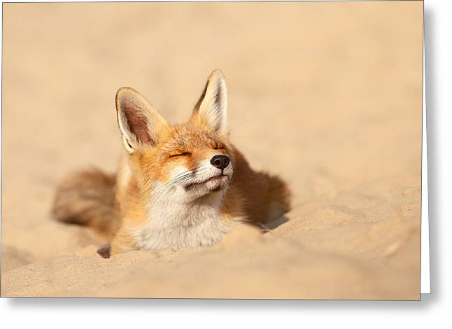 Zen Fox Series - Sandy Paws Greeting Card by Roeselien Raimond