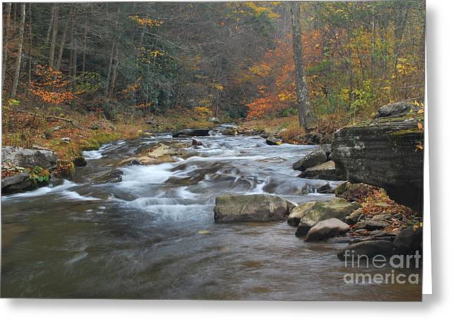 Pendleton County Greeting Cards - Seneca Creek Autumn Greeting Card by Randy Bodkins