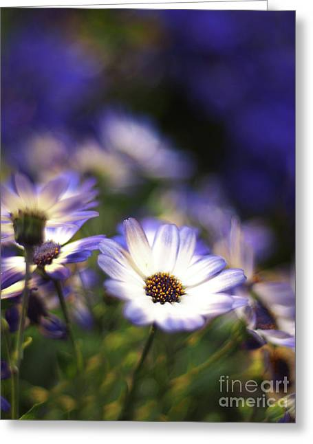 Senetti Dreams Greeting Card by Dorothy Lee