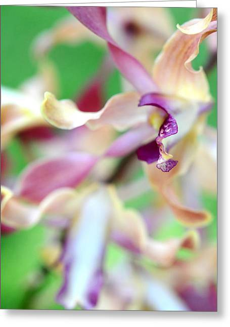 Sensual Touch Of Exotic II. Orchid II Greeting Card by Jenny Rainbow
