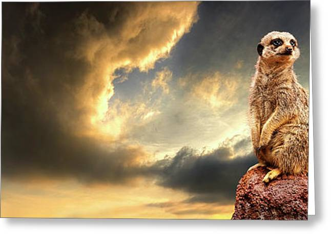 Meerkat Photographs Greeting Cards - Sentry Duty Greeting Card by Meirion Matthias