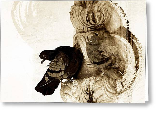 Royal Art Greeting Cards - Sepia Abstract Exotic Travel Pigeons in Palaces India Rajasthan 5g Greeting Card by Sue Jacobi