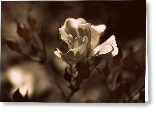 Brown Tones Digital Greeting Cards - Sepia Blossom Greeting Card by Jessica Jenney