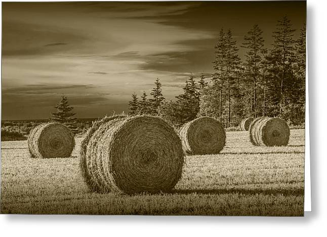 Harvest Art Greeting Cards - Sepia Hay Bales in a Harvest Field Greeting Card by Randall Nyhof