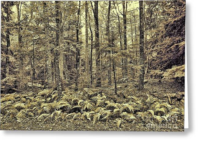 Sepia Landscape Greeting Card by Jeff Breiman