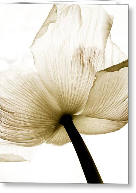 Sepia Poppy Flower Greeting Card by Frank Tschakert