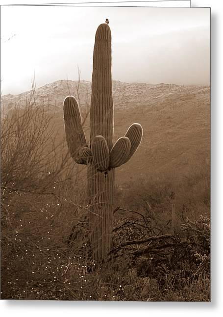 Rincon Greeting Cards - Sepia Saguaro Greeting Card by Teresa Stallings
