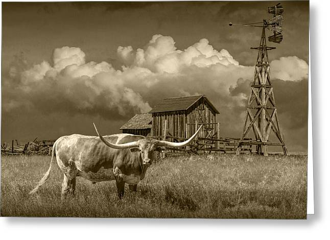 Randy Greeting Cards - Sepia Tone of a Longhorn Steer in a Prairie Pasture Greeting Card by Randall Nyhof