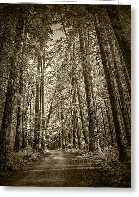 Sepia Tone Of A Rain Forest Dirt Road Greeting Card by Randall Nyhof