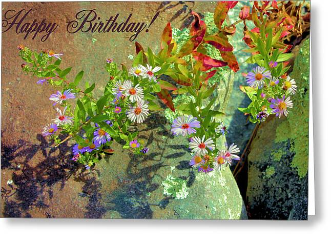 Aster Greeting Cards - September Birthday Aster Greeting Card by Kristin Elmquist