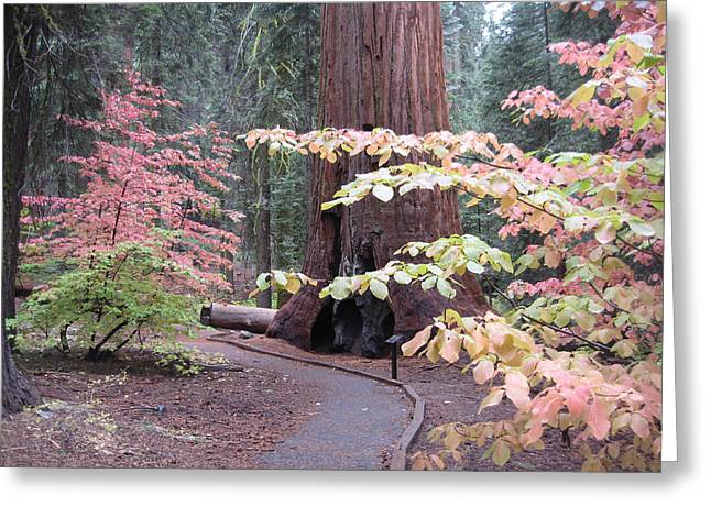 Rural Landscapes Photographs Greeting Cards - Sequoia  Trees 3 Greeting Card by Naxart Studio