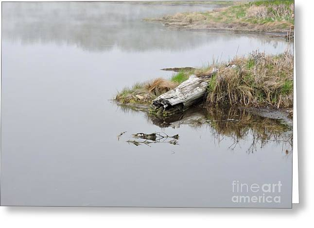 Coastal Maine Greeting Cards - Serene  # 1 Greeting Card by Marcia Lee Jones