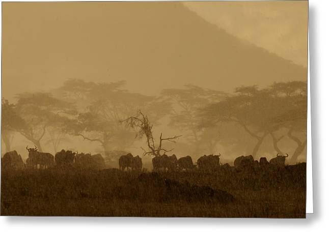 Great Migration Greeting Cards - Serengeti Monsoon Greeting Card by Joseph G Holland