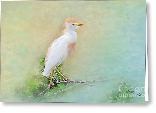 Cattle Egret Greeting Cards - Serenity Greeting Card by Betty LaRue