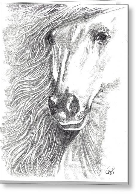 Quarter Horses Drawings Greeting Cards - Serenity Greeting Card by Kate Black