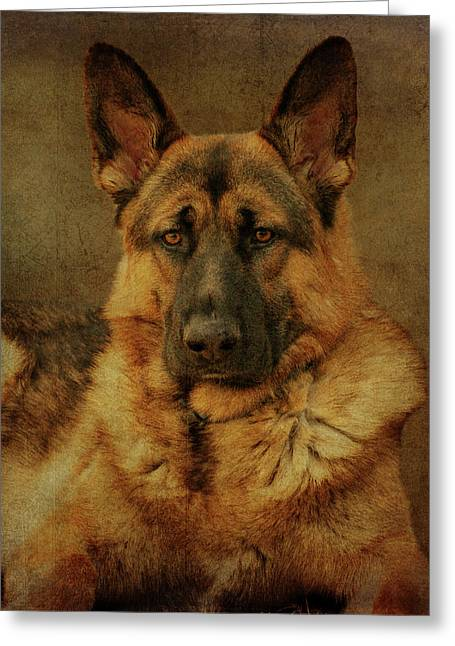 Alsatian Greeting Cards - Serious Greeting Card by Sandy Keeton