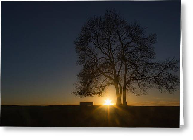 Bare Trees Greeting Cards - Setting Greeting Card by Chris Fletcher