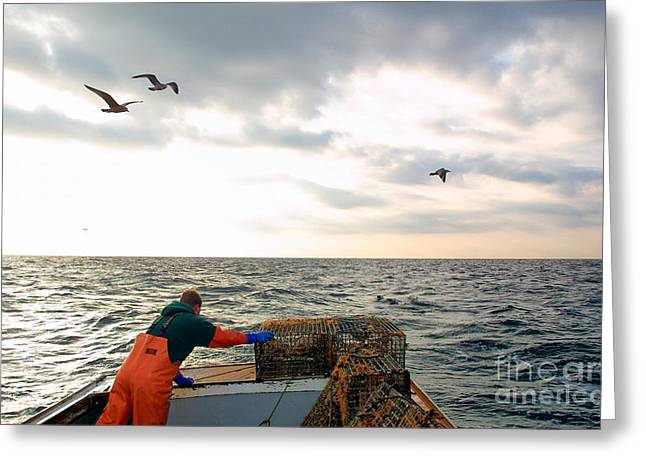 Lobster Fishermen Greeting Cards - Setting lobster traps in Chatham on Cape Cod Greeting Card by Matt Suess