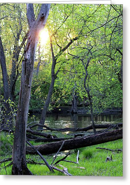Setting Sun On Nature Preserve Greeting Card by Codee Hart
