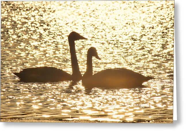 Trumpeter Silhouette Greeting Cards - Setting Swans Greeting Card by Leda Robertson