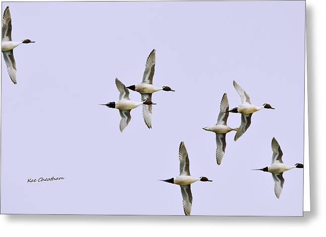 Water Fowl Greeting Cards - Seven Ducks on High Greeting Card by Kae Cheatham
