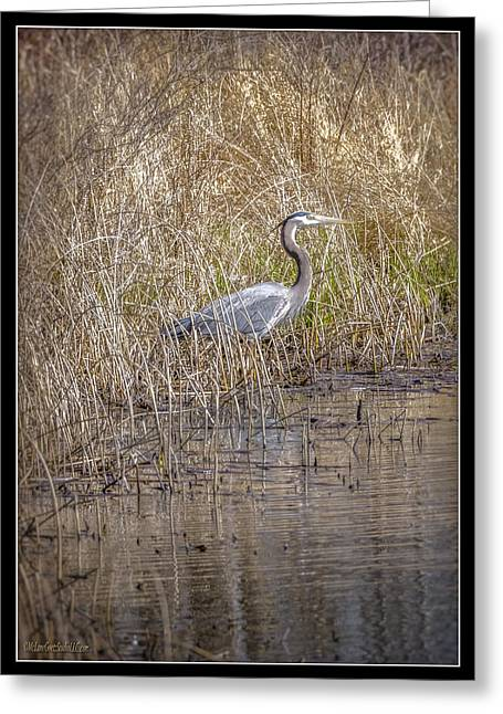 Nature Center Pond Greeting Cards - Seven Ponds Nature Center Blue Heron Greeting Card by LeeAnn McLaneGoetz McLaneGoetzStudioLLCcom