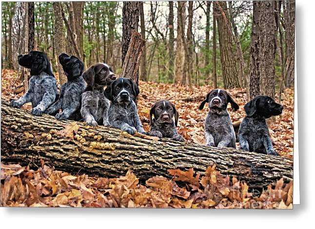 Hunting Bird Greeting Cards - Seven Pups on a Log Greeting Card by Timothy Flanigan