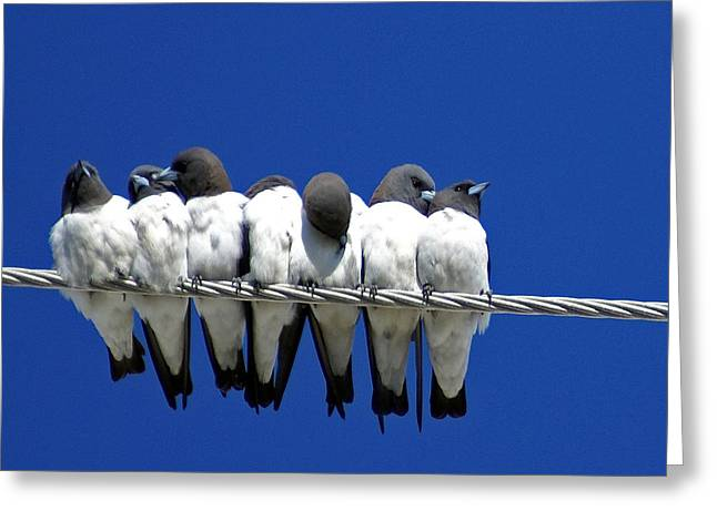 Powerline Greeting Cards - Seven Swallows Sitting Greeting Card by Holly Kempe