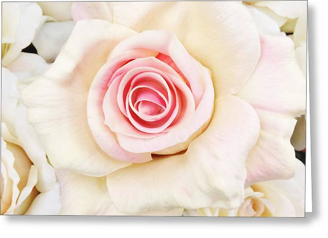 Pink Pastels Greeting Cards - Shabby Chic Romantic White Pink Rose - Pastel Shabby Chic White Roses  Greeting Card by Kathy Fornal