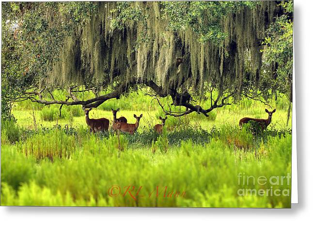Moss Greeting Cards - Shade Greeting Card by Richard Mann