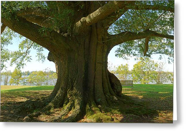 Shade Greeting Cards - Shade Tree 2 Panoramic Greeting Card by Mike McGlothlen