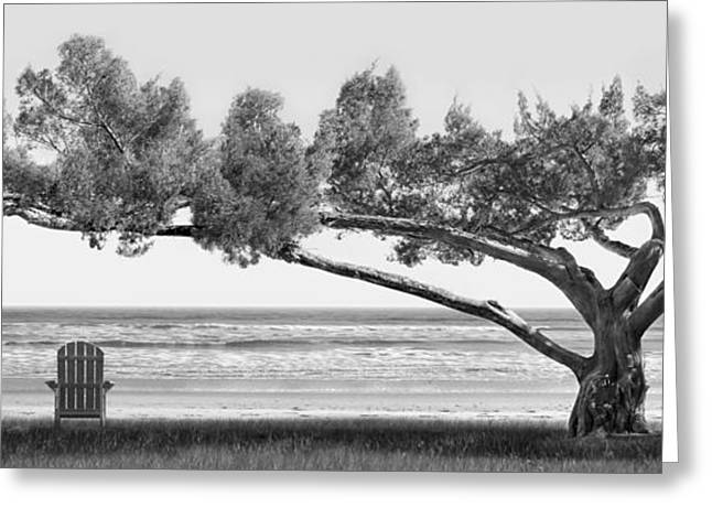 Shade Tree Bw Greeting Card by Mike McGlothlen