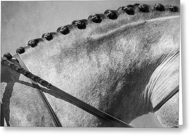 Shades Of Grey Fine Art Horse Photography Greeting Card by Michelle Wrighton