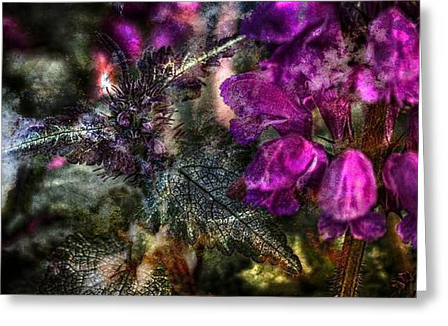 Gifts Greeting Cards - Shades Of Purple  Greeting Card by Thom Zehrfeld