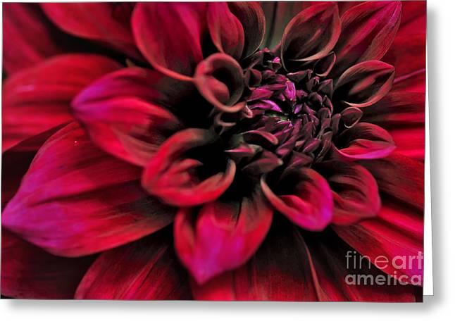 Rhythmic Greeting Cards - Shades of Red - Dahlia Greeting Card by Kaye Menner
