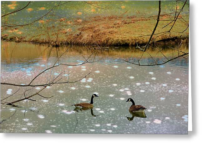 Soft Light Greeting Cards - Shades Of Seasons Past Greeting Card by Jan Amiss Photography