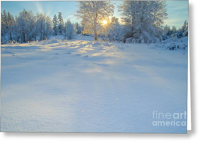 Sun And Tree Greeting Cards - Shadow Dance Greeting Card by Idaho Scenic Images Linda Lantzy