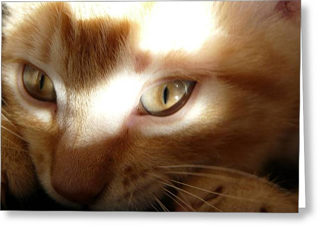 Cat Photographs Greeting Cards - Shadow Play Greeting Card by Juliet Mevi-Shiflett