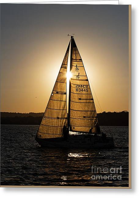Water Vessels Greeting Cards - Shadow Sailors Greeting Card by Barbara McMahon