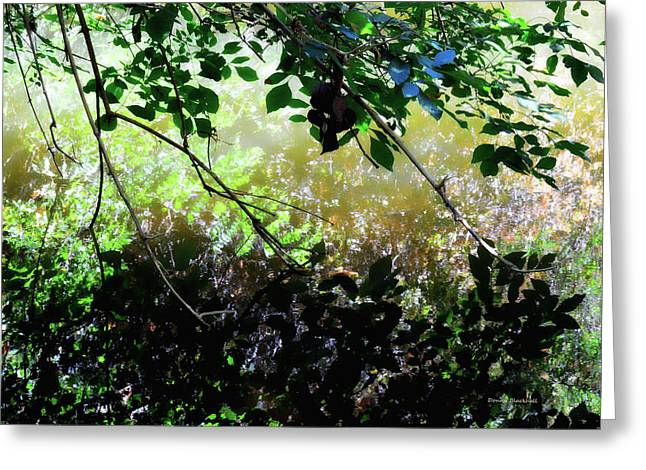 Shadowed Reflections Greeting Card by Donna Blackhall