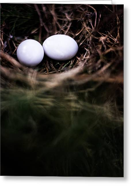 Birds In A Nest Greeting Cards - Shadows and Light Greeting Card by Parker Cunningham