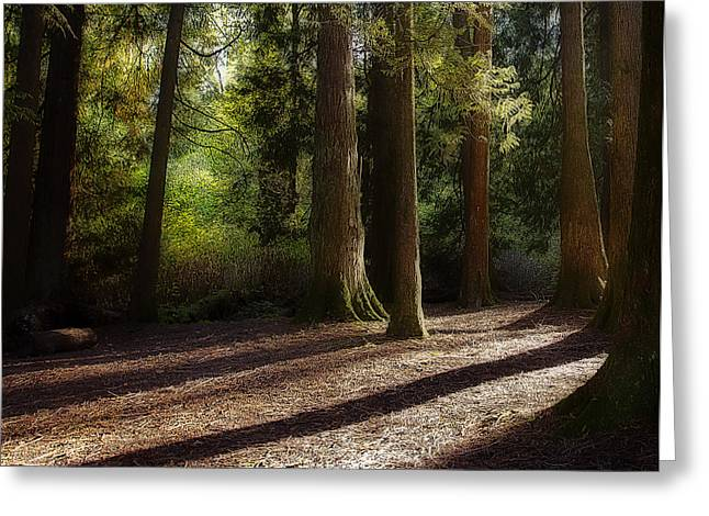 Reach Greeting Cards - Shadows in the Forest Greeting Card by Marion McCristall