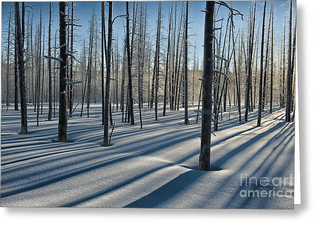 Yellowstone Art Greeting Cards - Shadows of the Forest Greeting Card by Sandra Bronstein