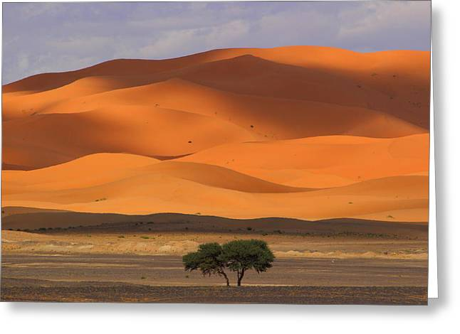 Rabat Greeting Cards - Shadows on the Dunes Greeting Card by Ramona Johnston