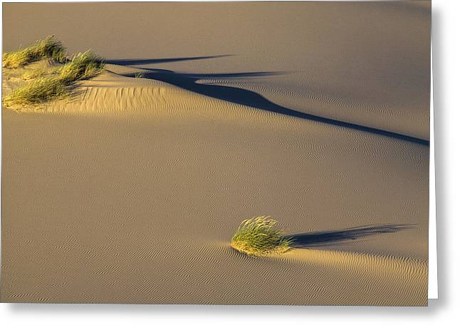 Oregon Dunes National Recreation Area Greeting Cards - Shadows on the Sand Greeting Card by Robert Potts