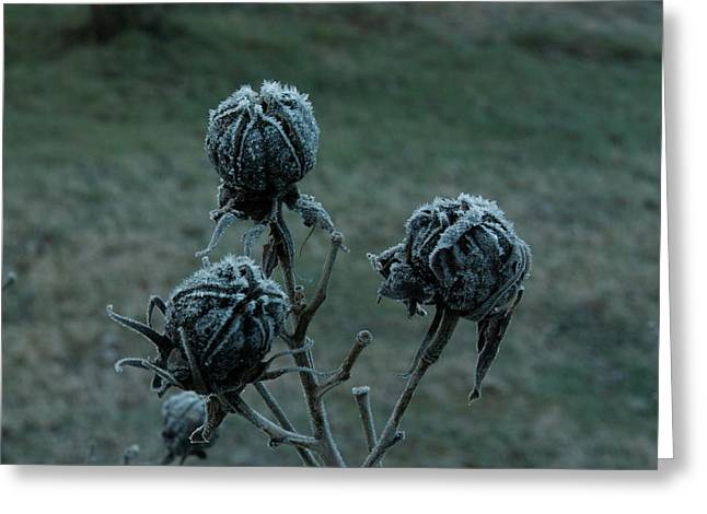 Reverence Greeting Cards - Shadowy Frozen Pods from the Darkside Greeting Card by Douglas Barnett