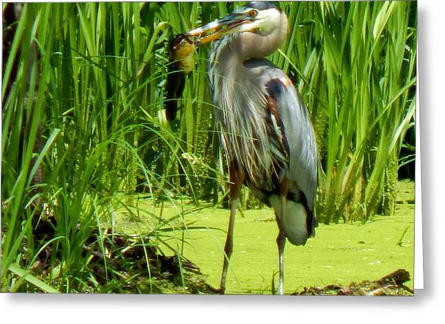 Wildlife Refuge. Greeting Cards - Shady Lunchtime Greeting Card by Wild Thing